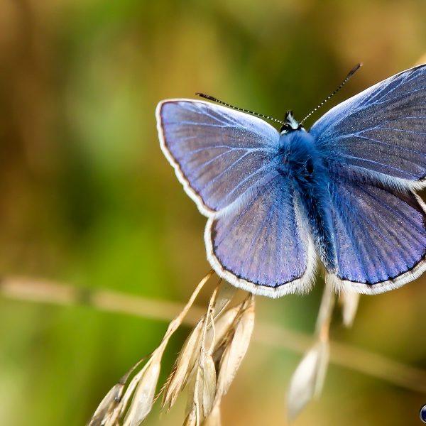 Insekter og sommerfugle